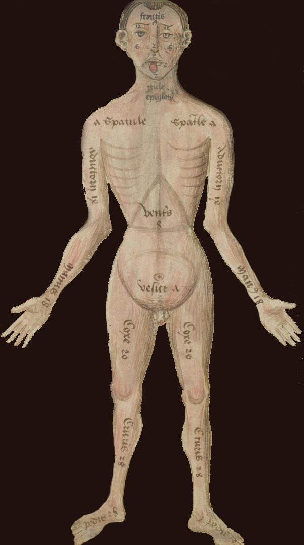 The Art and Science of Healing | Medieval Medicine
